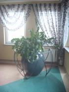 kuta osłona rośliny , w formie siatki sferycznej